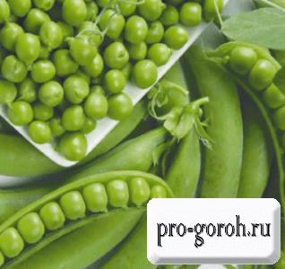Выращивание гороха Норд-Вест