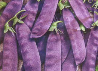 Горох Фиолетовый сахар