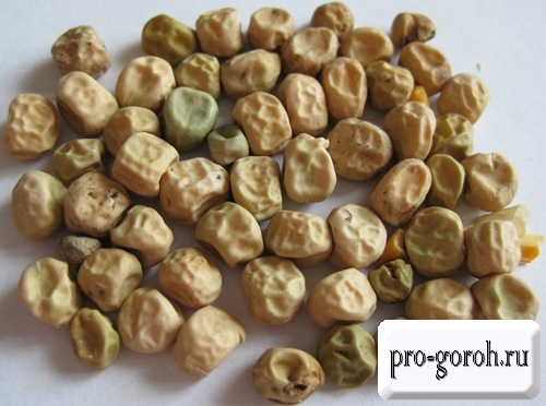 Семена гороха Сахарный-2